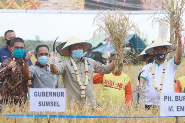 Genjot Produksi Beras, Herman Deru Panen Raya di Muara Enim