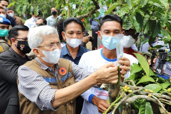 Wagub Mawardi Yahya Launching Gerakan Satu Juta Stek Batang Pucuk Kopi di Pagar Alam